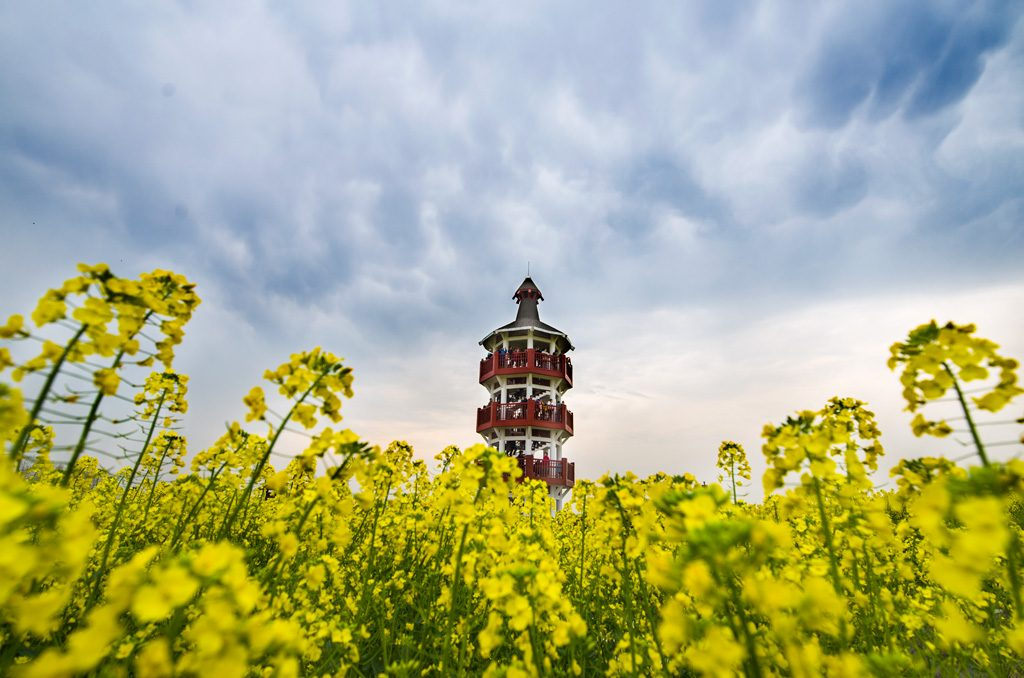 """rapeseed flower field china"", ""Planning a trip to china"", ""travel tips for china"", ""tips for traveling in china"", ""china travel tips"""